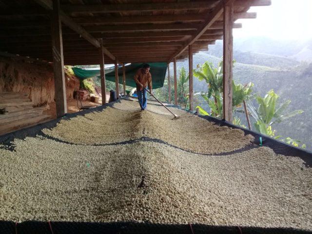 """Séchage du café dans la ferme """"La Lucuma"""", Pérou"""